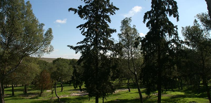 Pinar de San Isidro